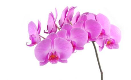 bering blomster åbningstider
